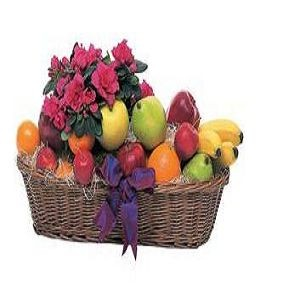 Plant and Fruit Basket - Deluxe $52.16.