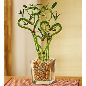 Heart Shaped Bamboo-Extra Large At $54.99