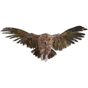 Buy Martha Stewart Living Haunted Owl At $59(Homedecorators)